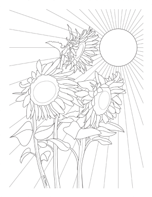 Sunflowers Coloring Page for Adults