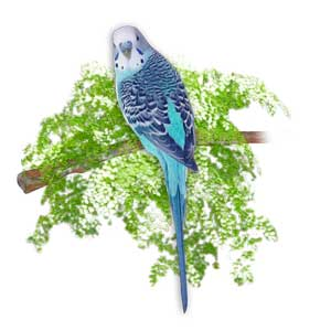 Blue Budgie on Green